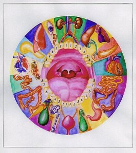 Tooth-Organ